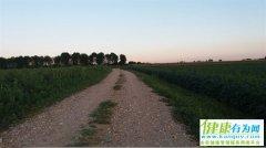 心理测试:你会走哪条小路散心?测你近期会走什么运!
