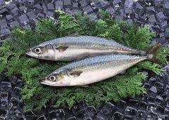 怎样保存鲜鱼?直接放冰箱就错了
